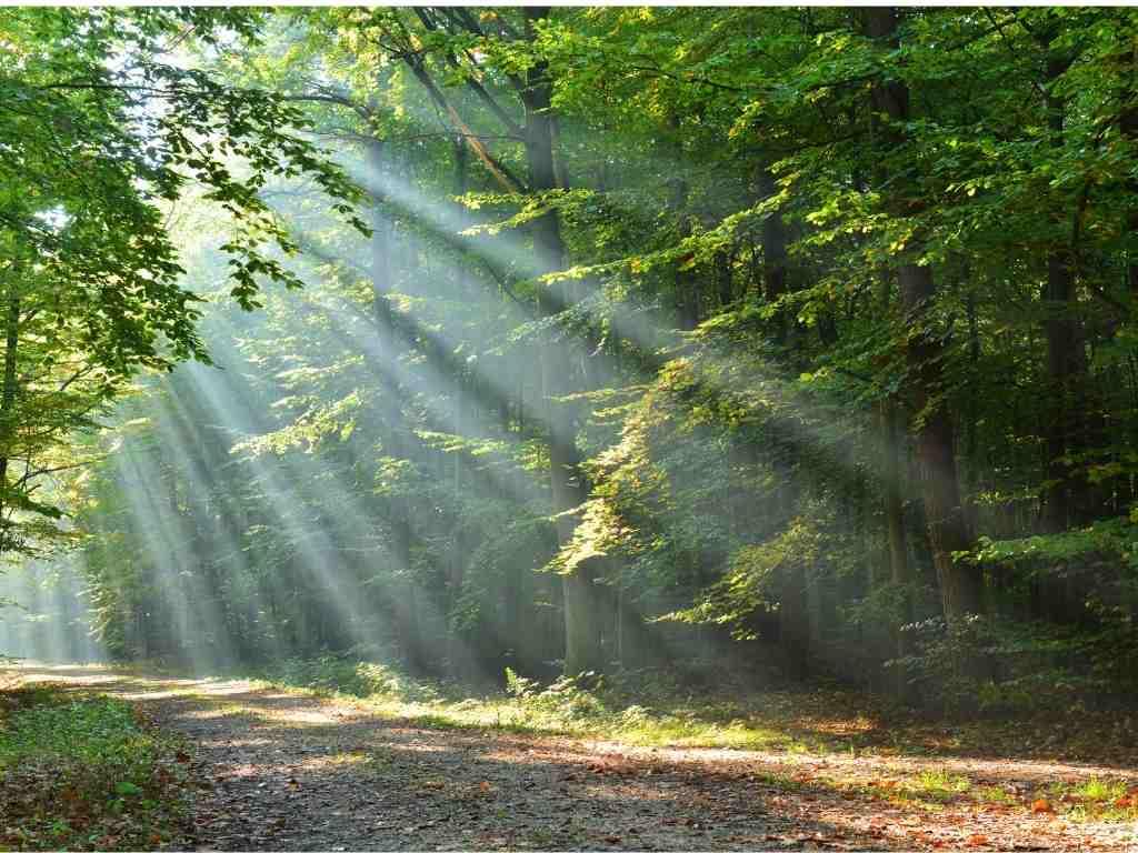 מאירים את היער