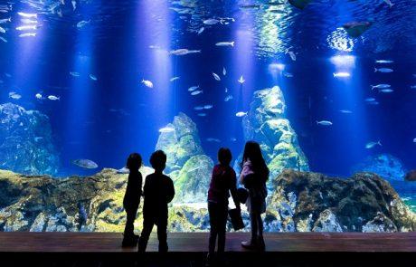 """לראשונה בירושלים: קייטנה באקווריום בגן החיות התנ""""כי להכרת בתי הגידול השונים של בעלי החיים הימיים"""