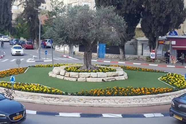 כ-450 אלף פרחים יישתלו במסגרת שתילת סתיו-חורף ברחבי ירושלים