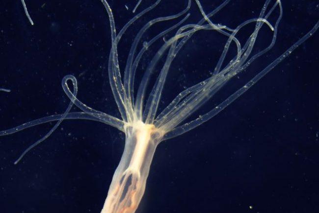 האוניברסיטה העברית מנסה לפענח את אחת החידות המסתוריות בטבע: מקור הארס בעולם החי
